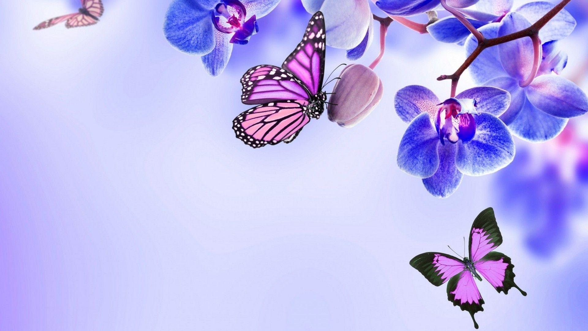 aesthetic butterfly desktop wallpapers