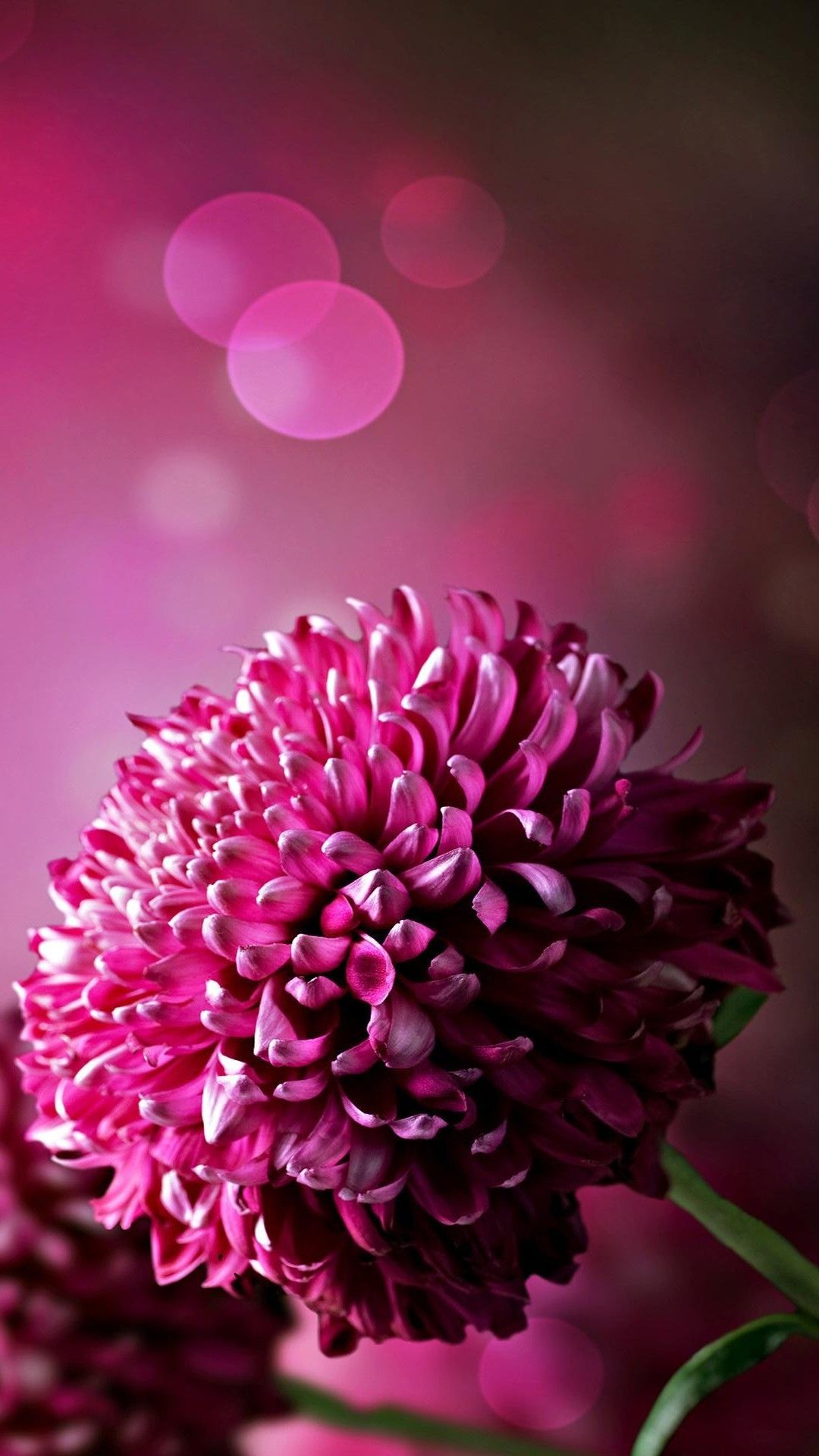 Purple Flowers Wallpapers For Phone