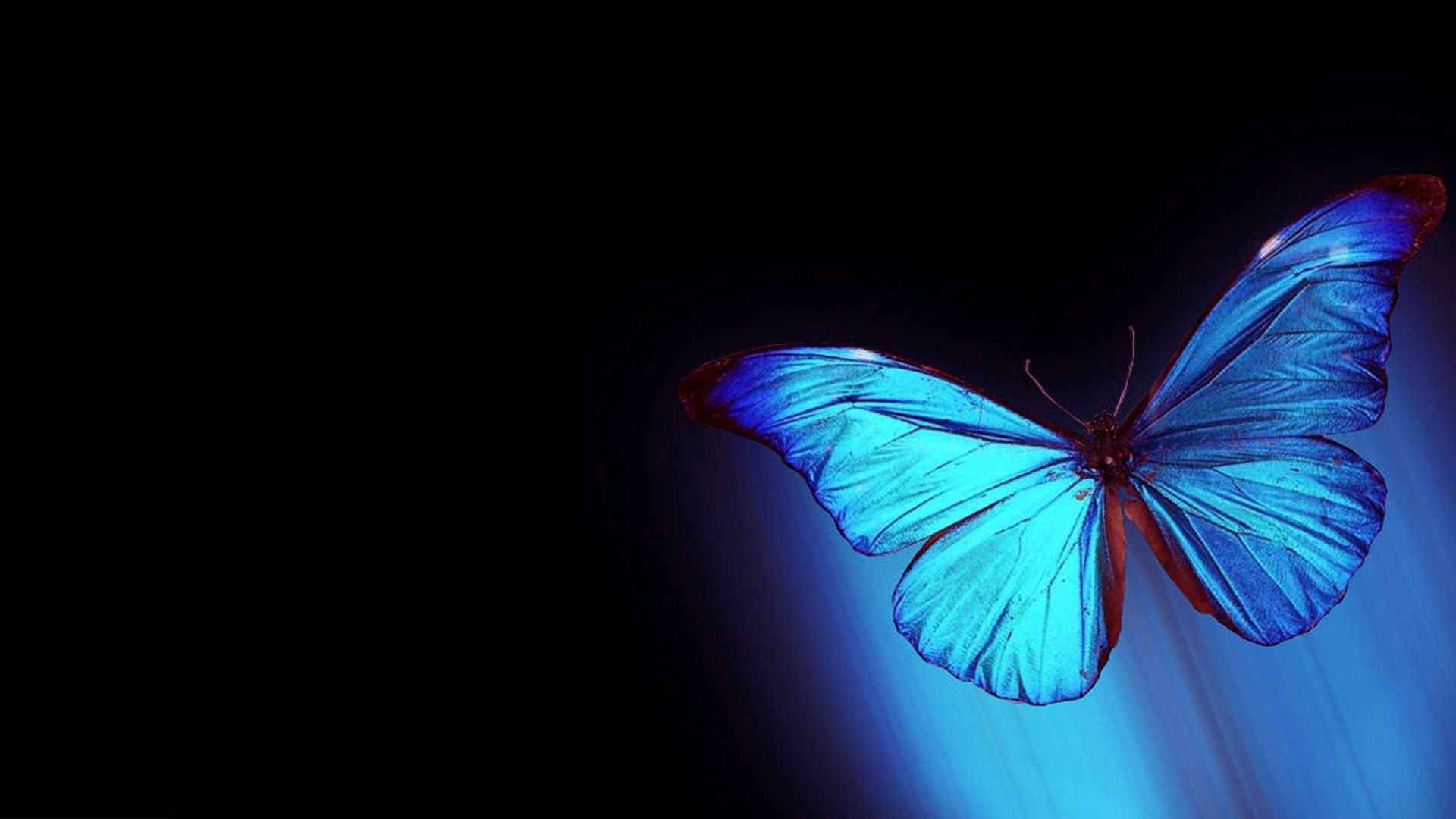Butterfly Laptop Wallpapers Wallpaper Cave