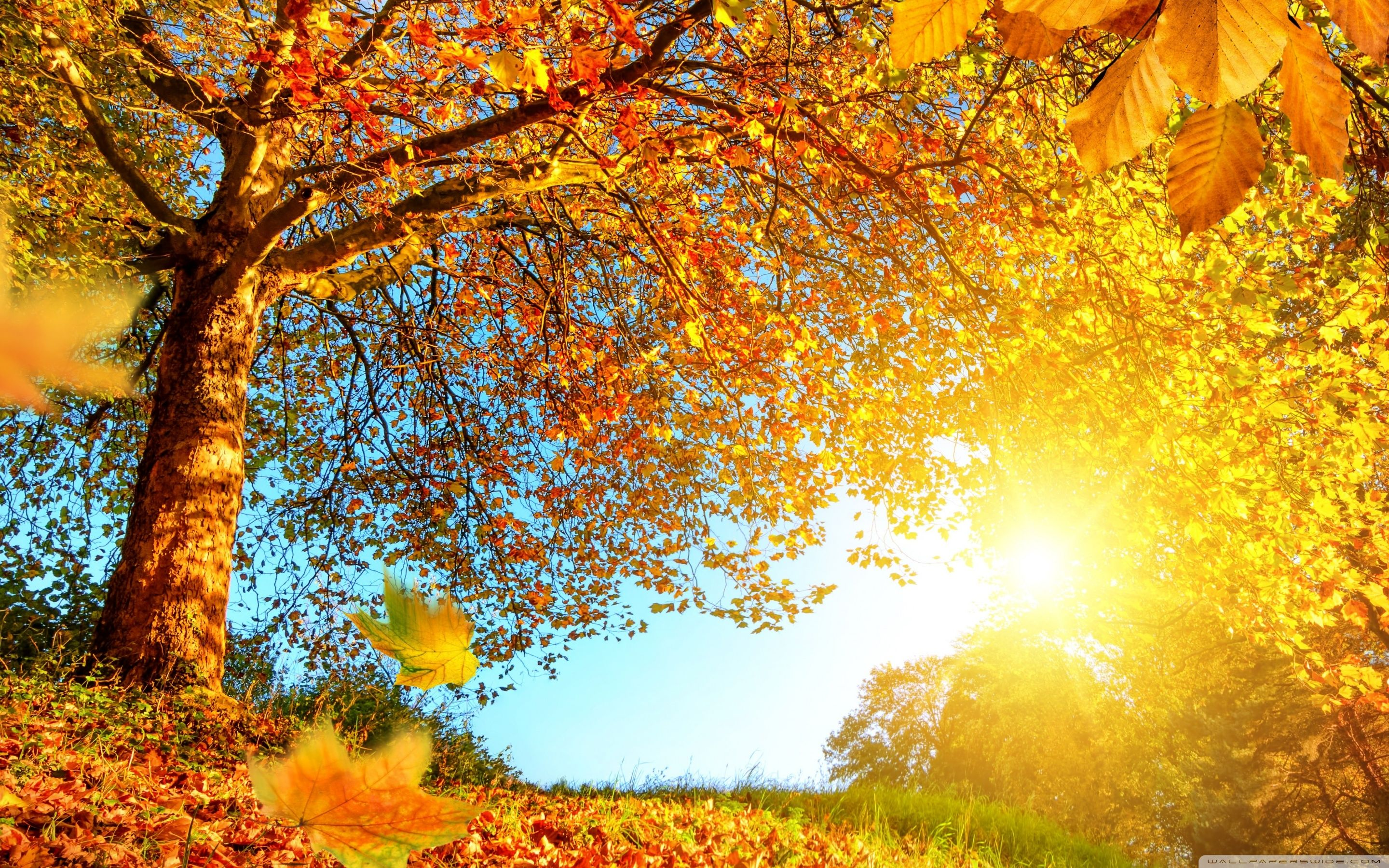 Ultra Wide Autumn Wallpapers Wallpaper Cave