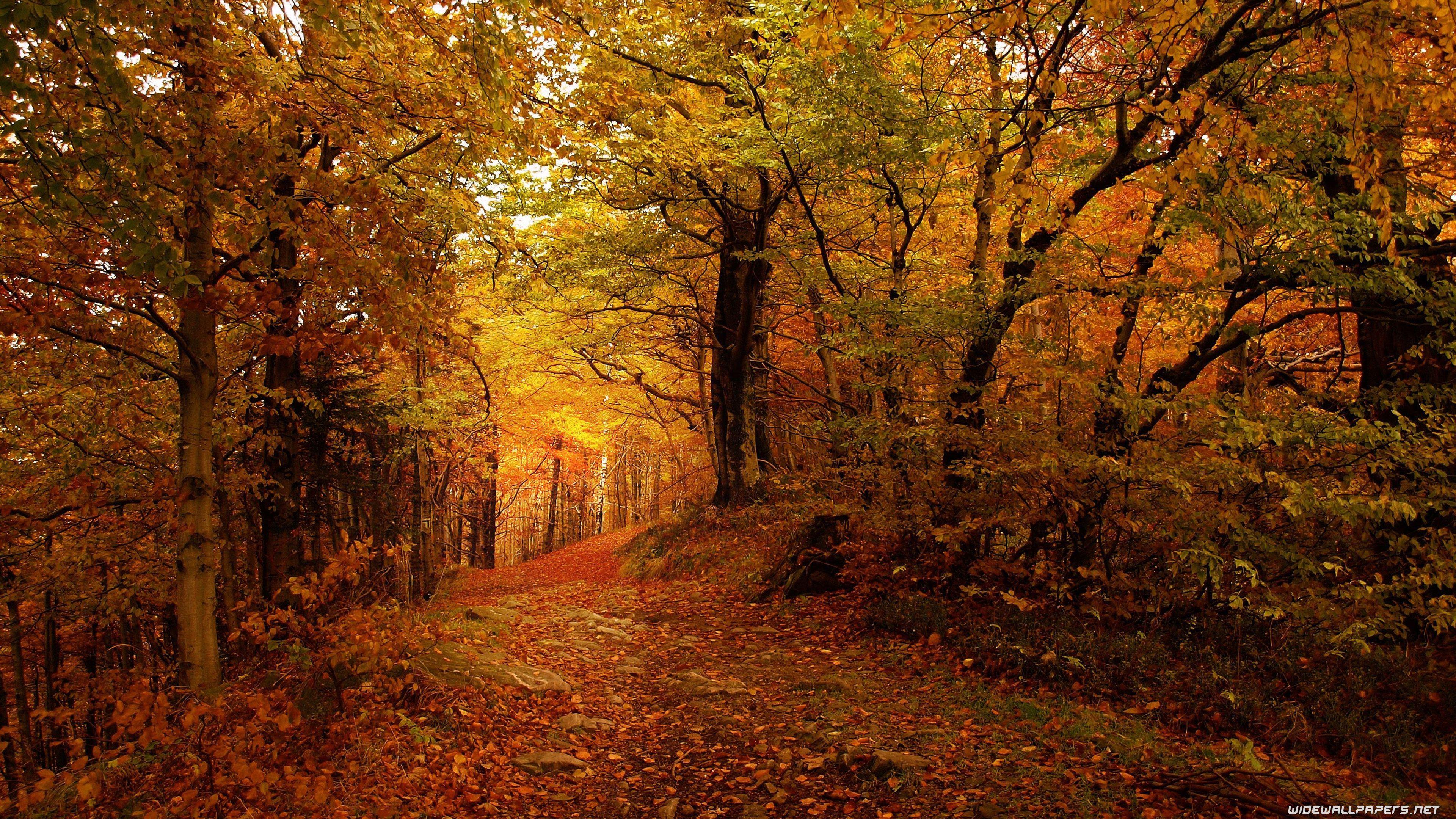 4k Autumn Wallpapers Wallpaper Cave