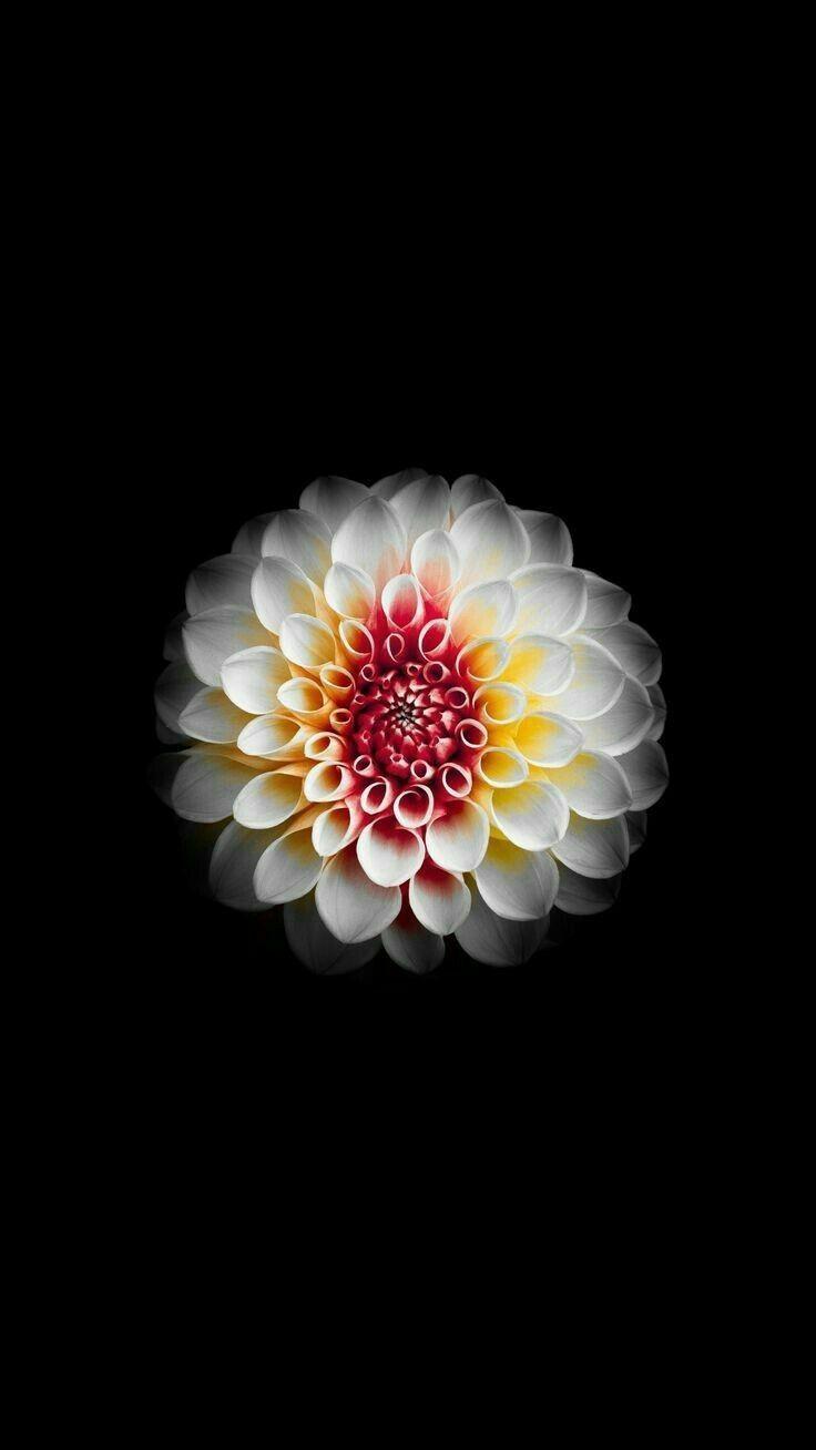 iPhone Flower HD 4k Wallpapers - Wallpaper Cave