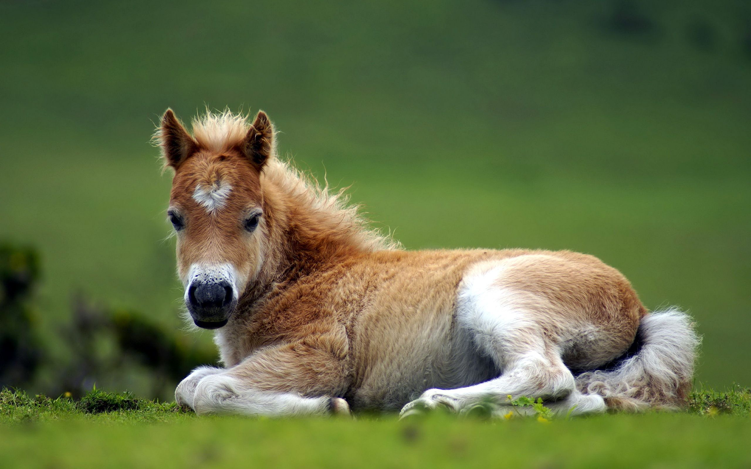 Baby Horse Wallpapers Wallpaper Cave