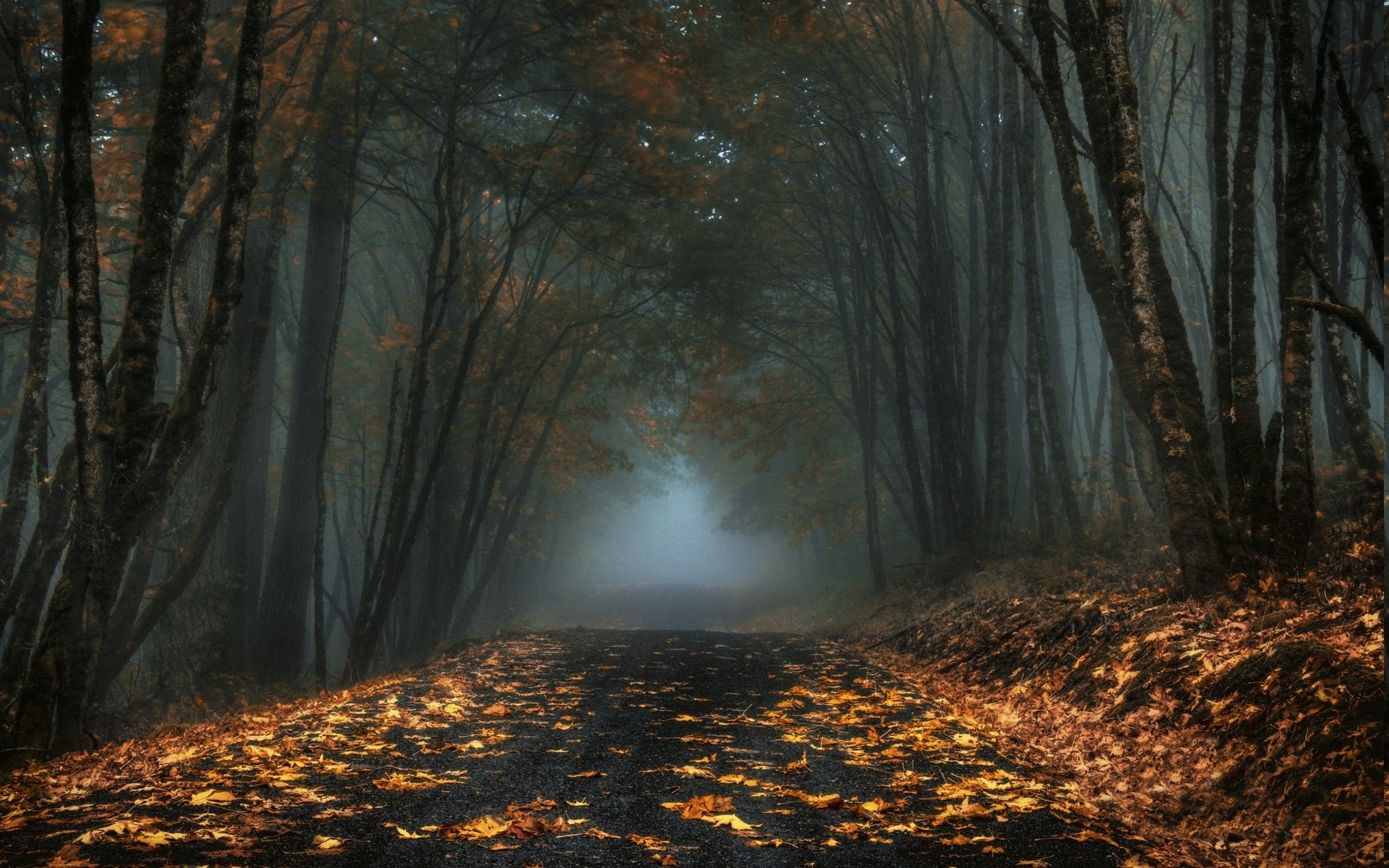 nature, Landscape, Mist, Road, Forest, Leaves, Fall, Trees, Dark, Morning Wallpapers HD / Desktop and Mobile Backgrounds