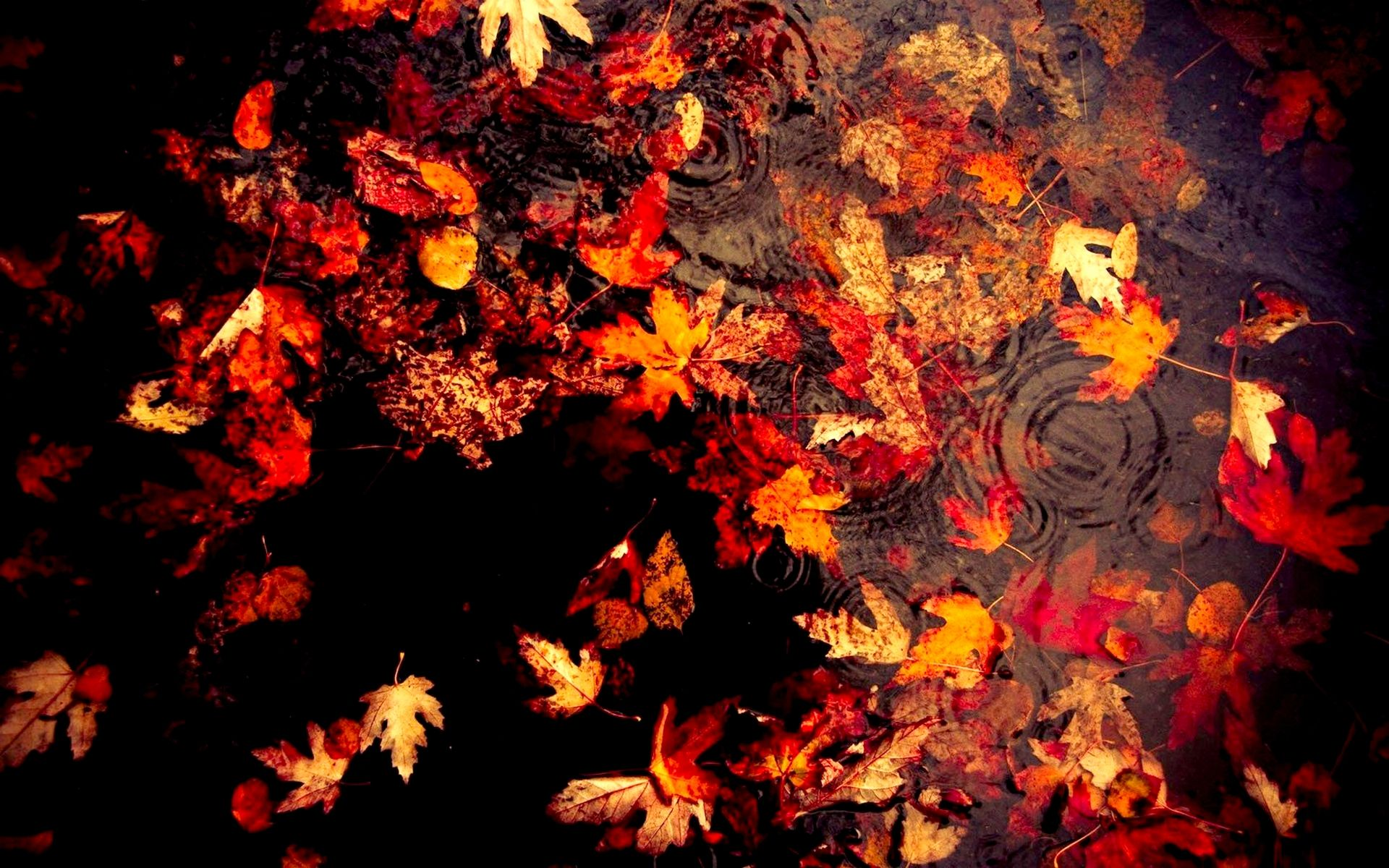 Autumn Leaves Wallpapers 33084 1920x1200px