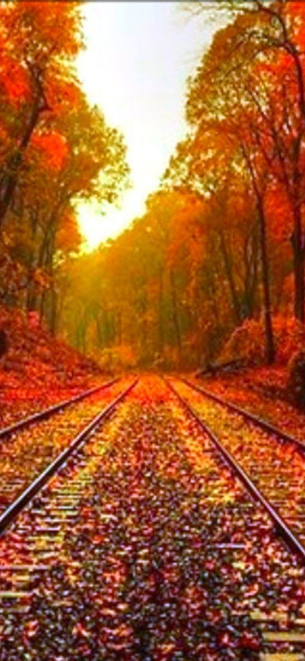 Autumn Iphone 11 Pro Max Wallpapers Wallpaper Cave