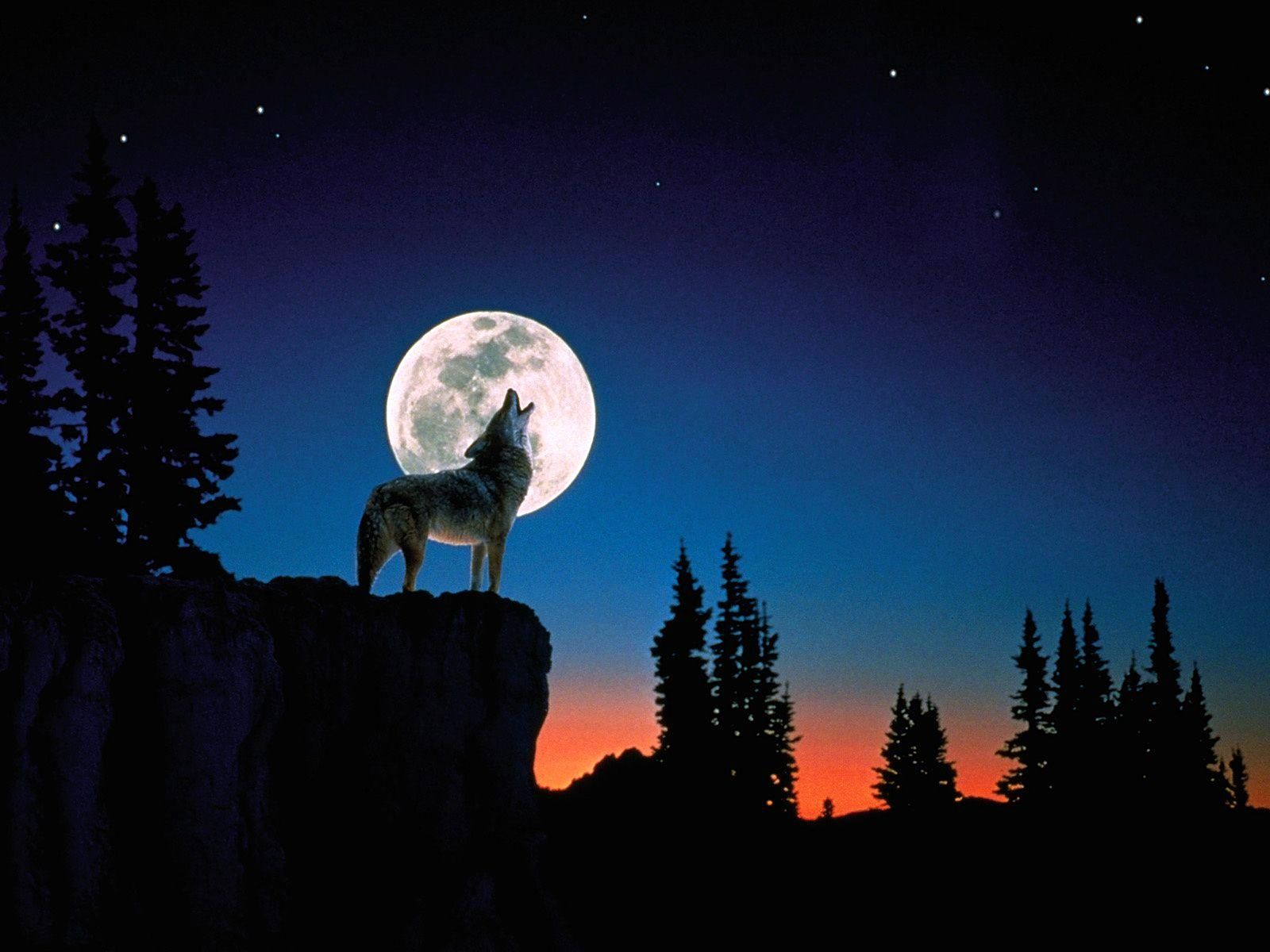 WOLF HOWLING WALLPAPER