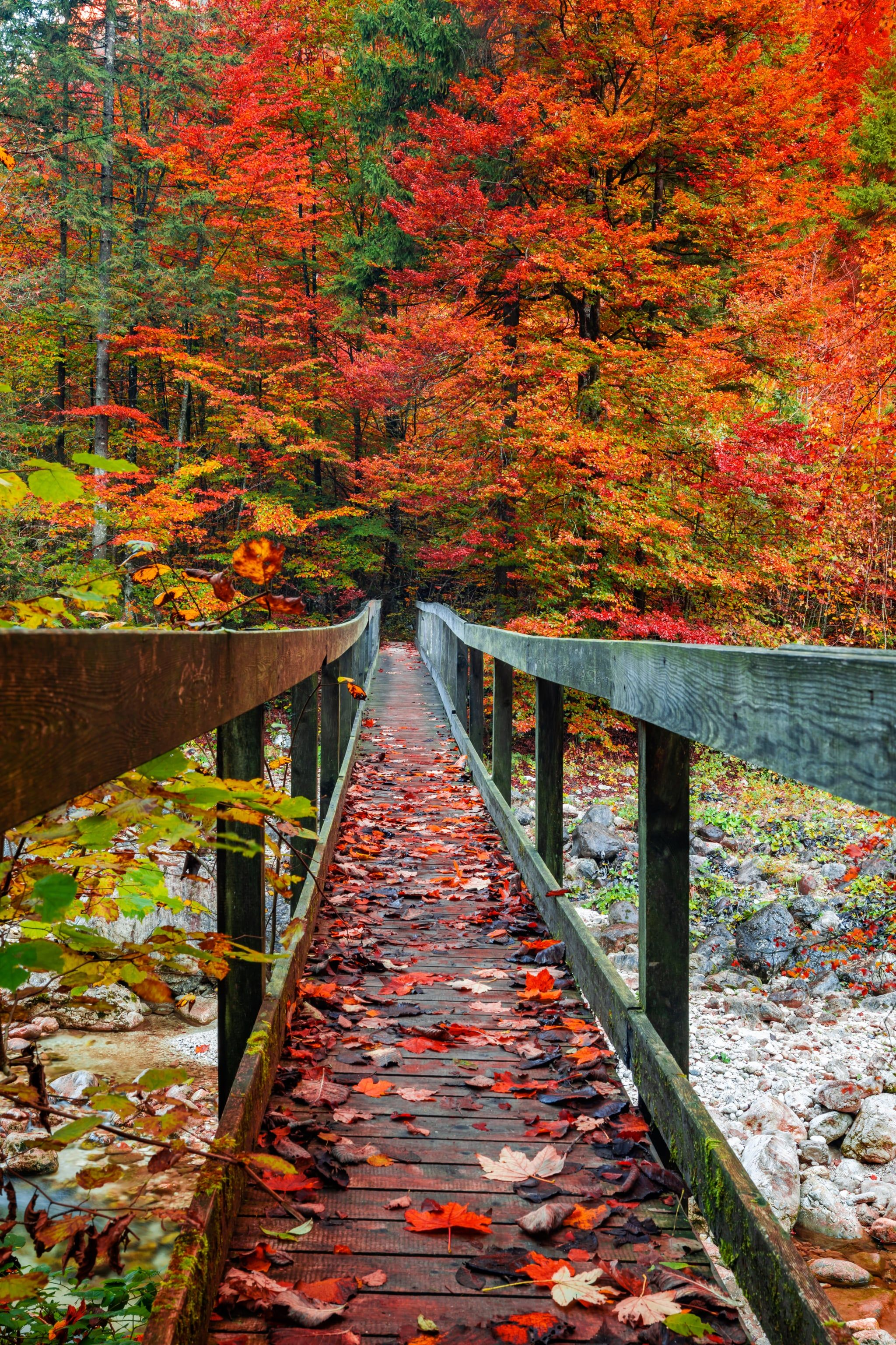 iPhone 12 Autumn Wallpapers - Wallpaper ...