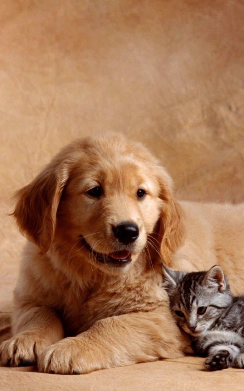 Cute Dogs And Cats Wallpapers - Wallpaper Cave