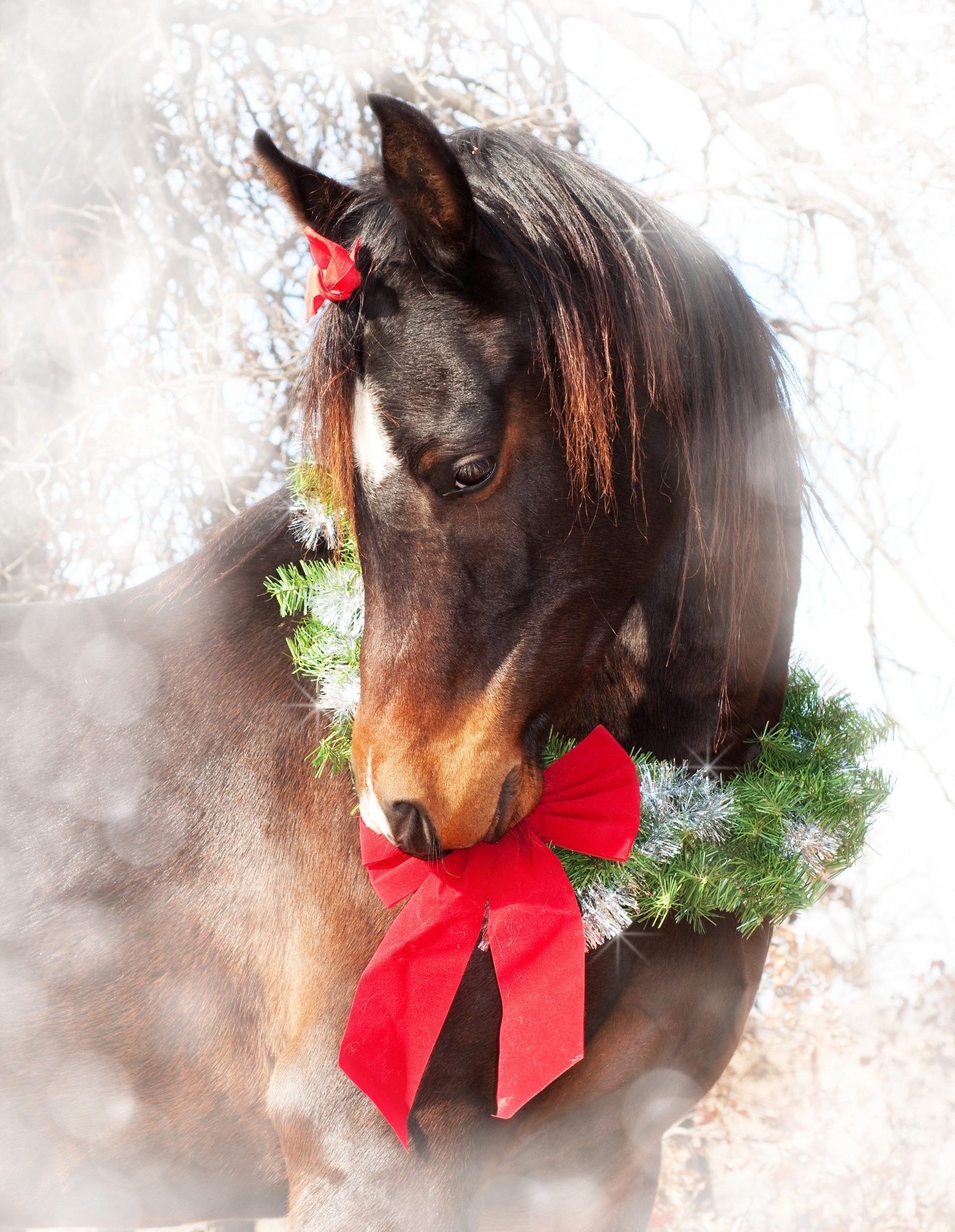 Christmas Horse Wallpapers Wallpaper Cave