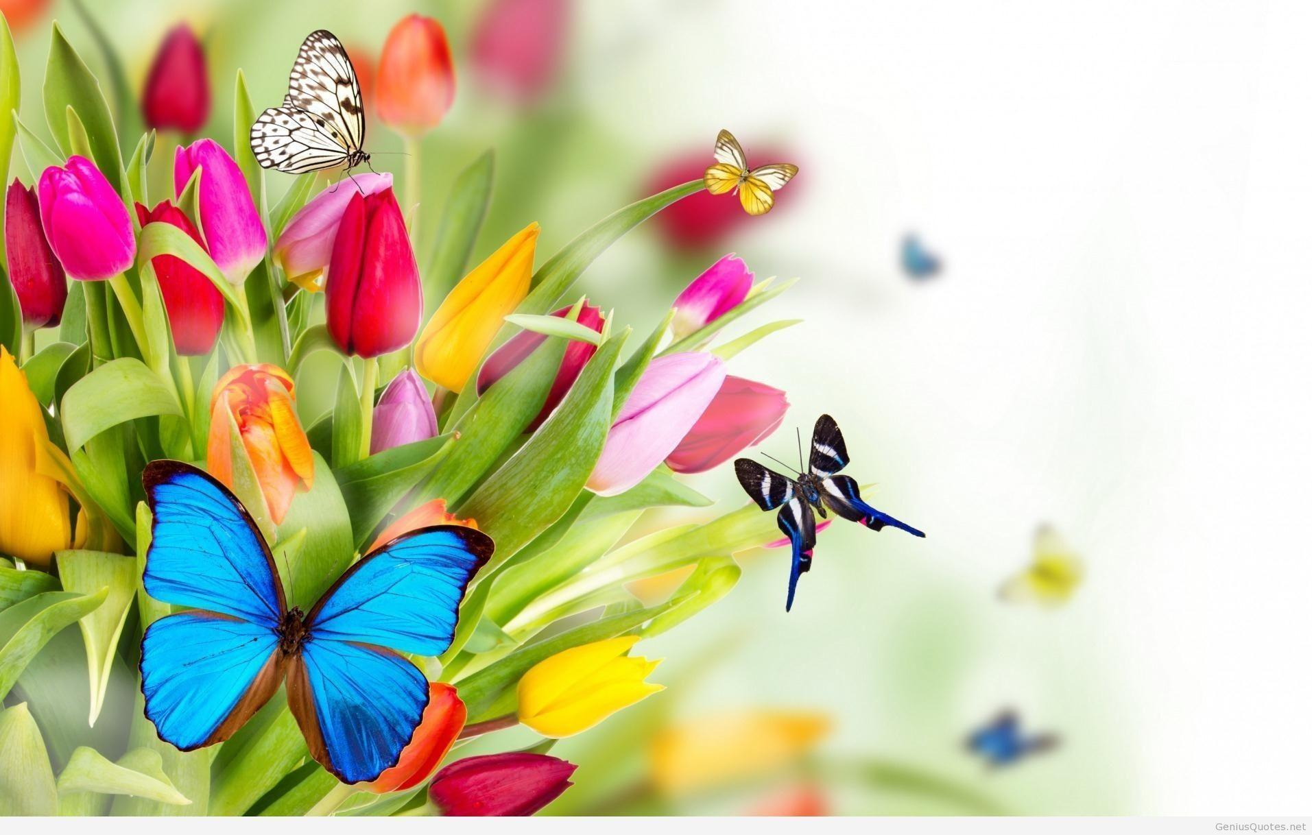 HD Spring Wallpaper