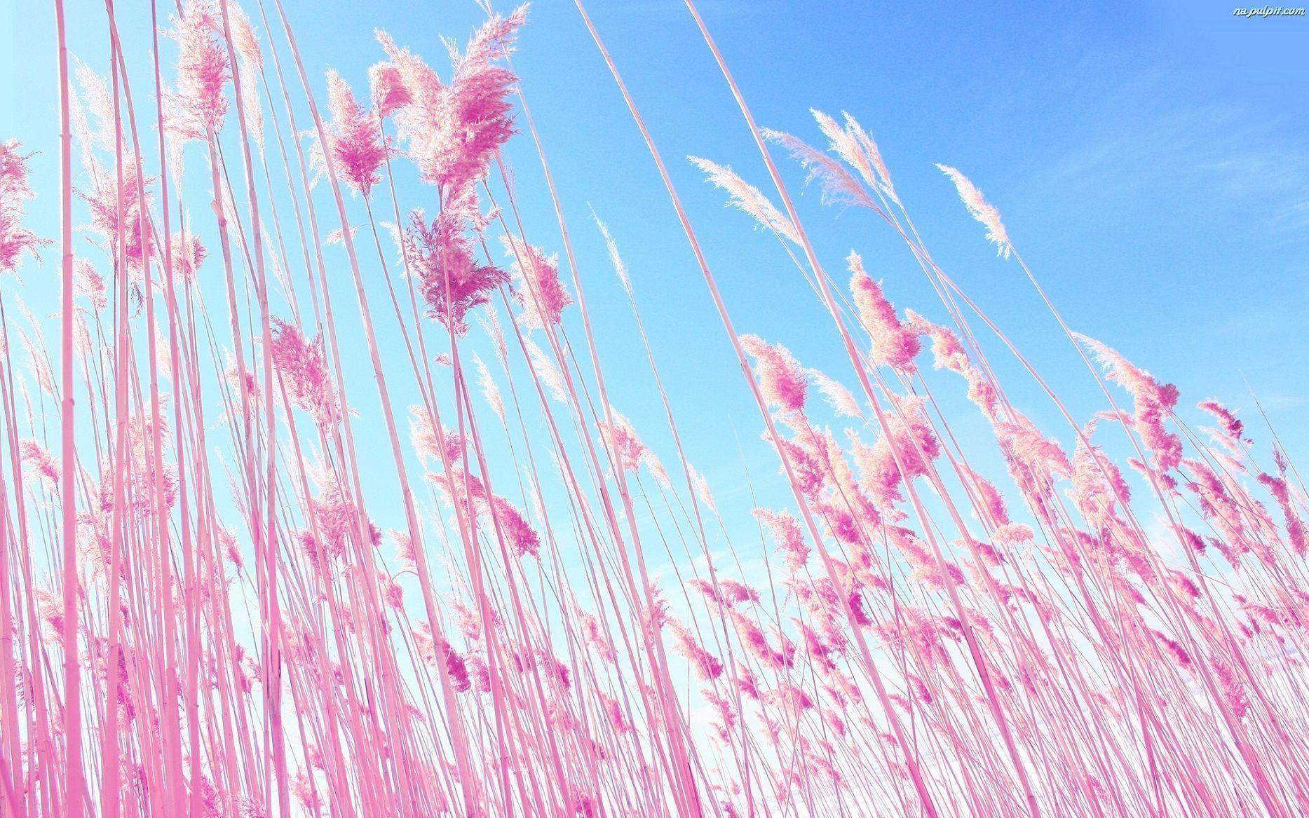 Pink Macbook Wallpapers - Wallpaper Cave