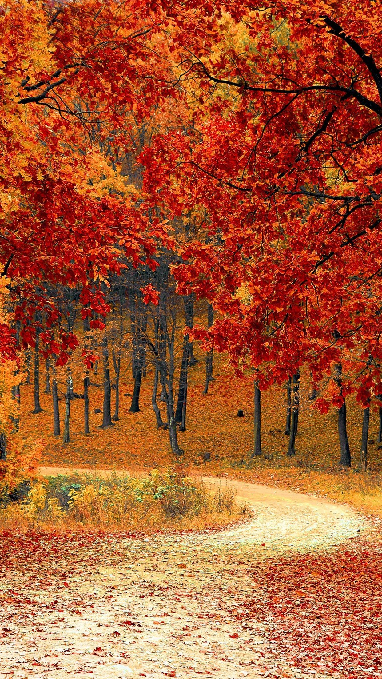 iPhone 12 Autumn Wallpapers - Wallpaper ...
