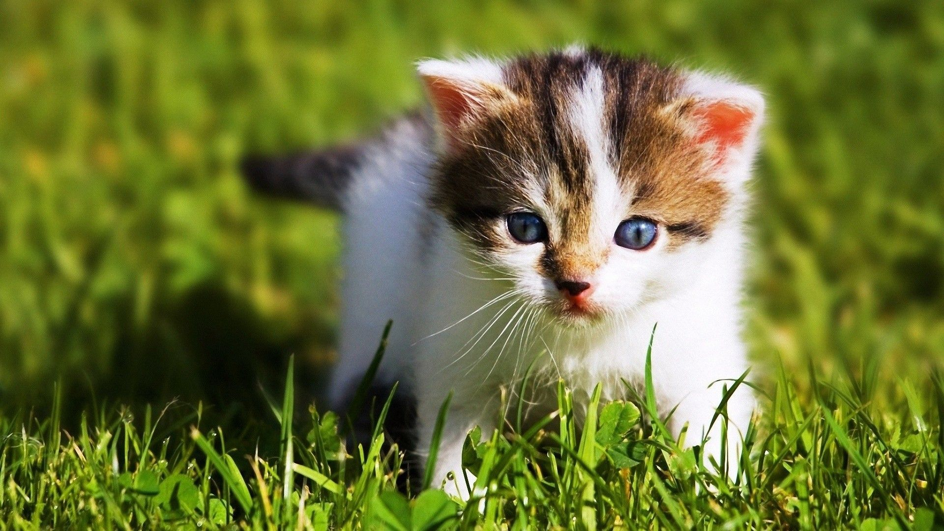 Pictures Animal Baby Cute Wallpapers - Wallpaper Cave