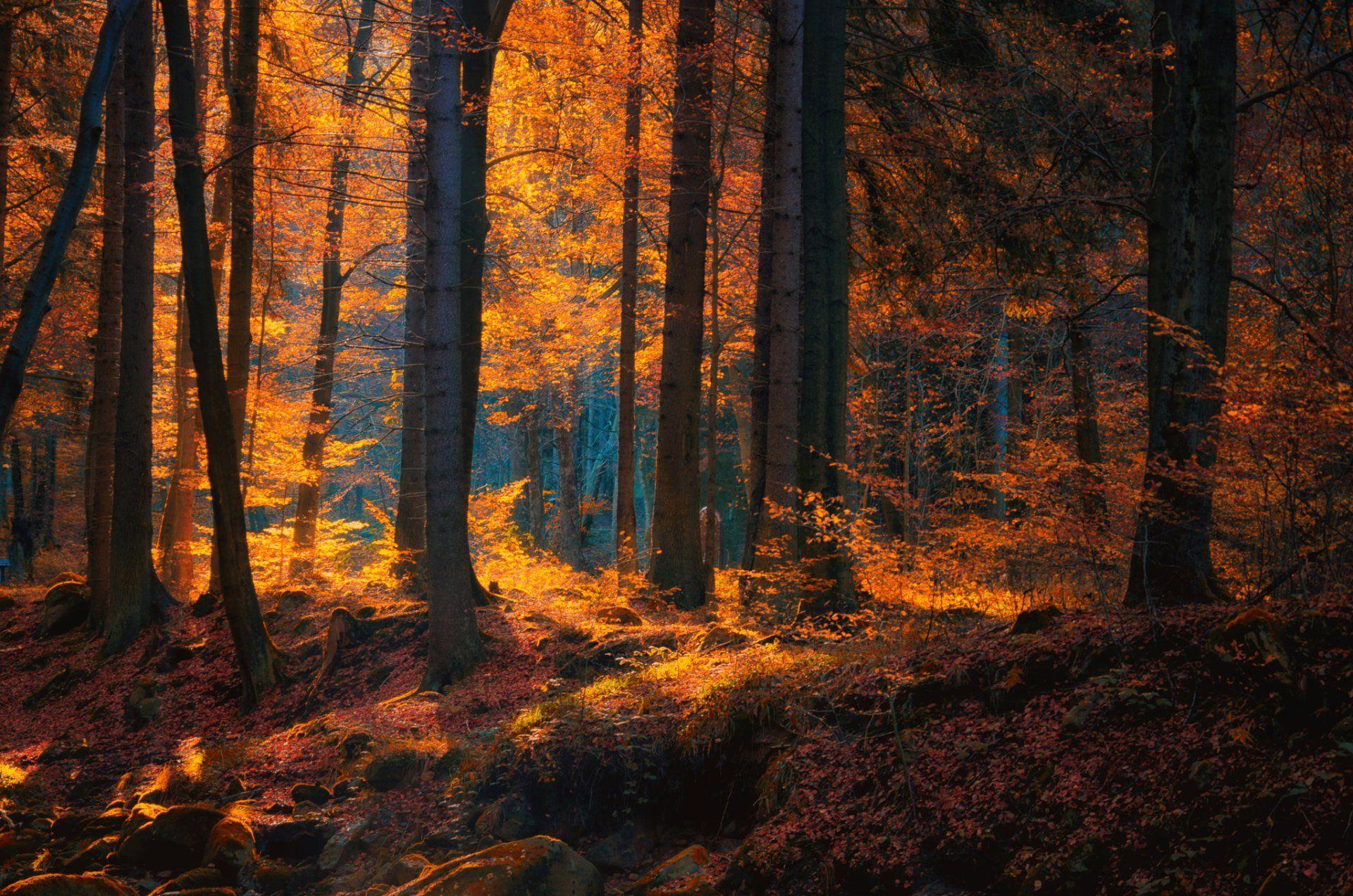 Autumn Forest Dark Wallpapers Wallpaper Cave