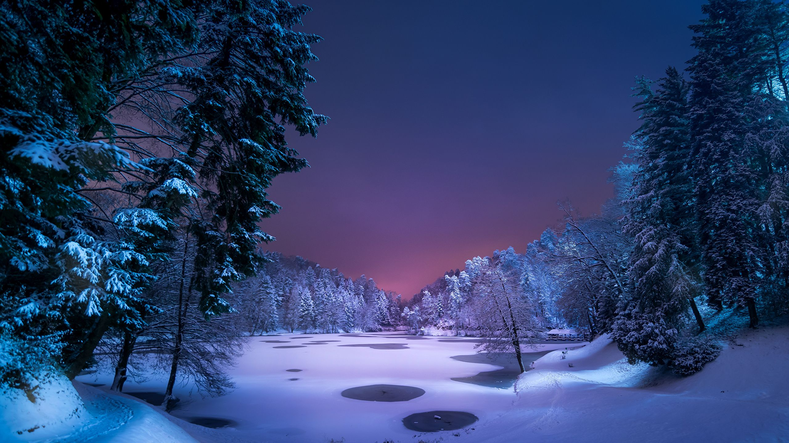 Winter Night 2560x1440 Wallpapers Wallpaper Cave