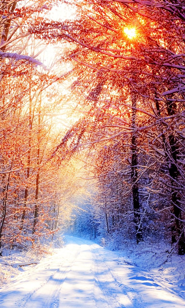 Winter Good Morning Image Nature