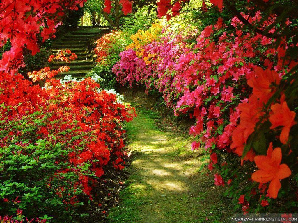 Red Rose Garden Background Hd