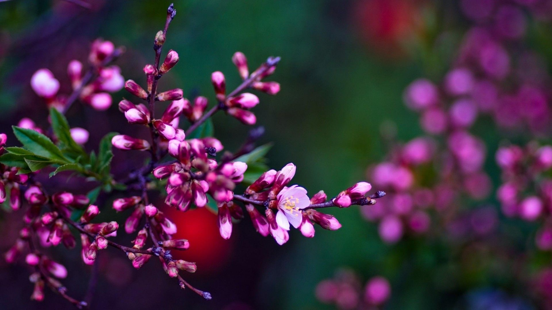 Wallpapers Spring Flowers HD