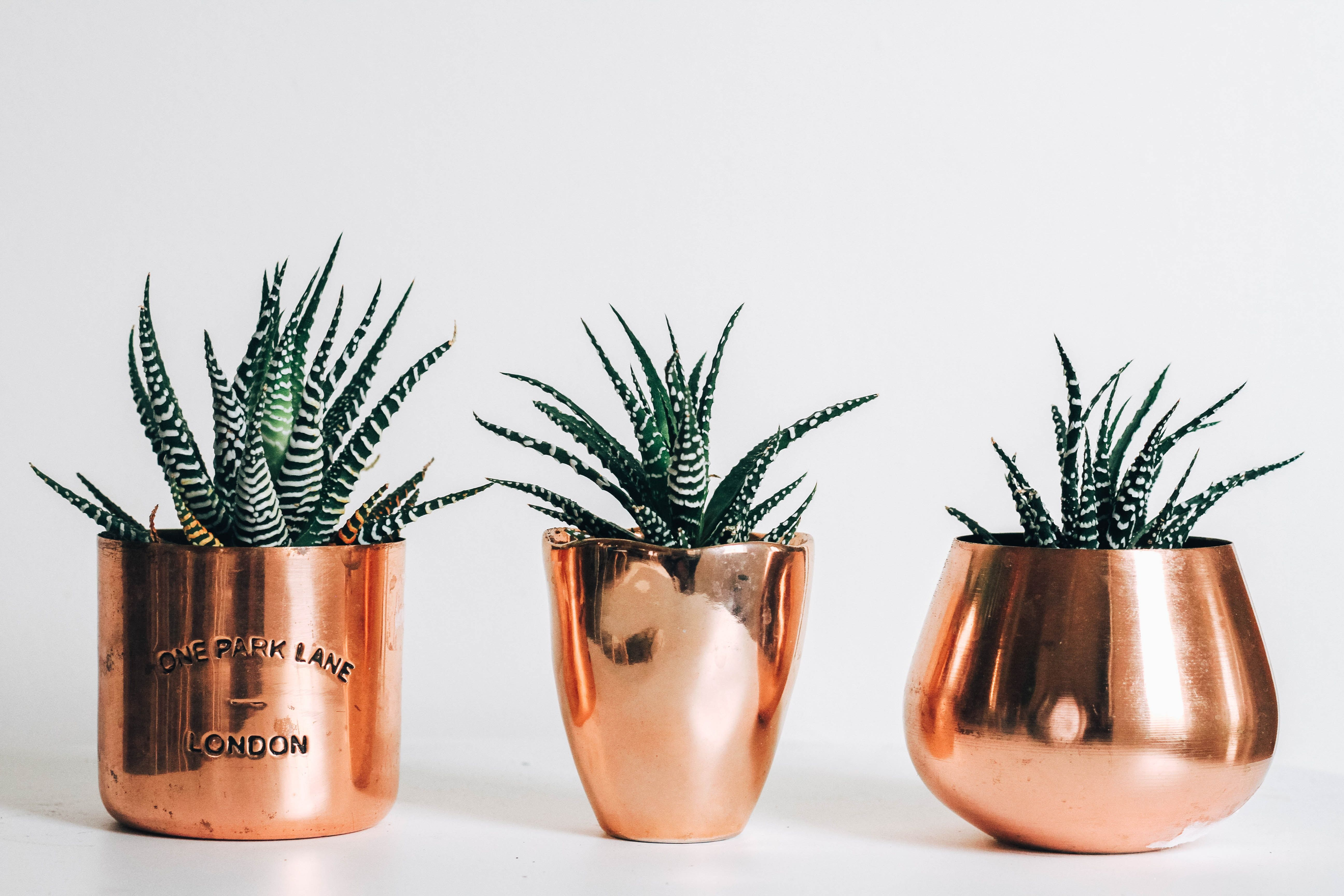 Rose Gold Laptop Wallpapers Wallpaper Cave Rose gold background aesthetic 12 aesthetic pink and rose gold backgrounds, perfect for your instagram or social media profiles! wallpaper cave