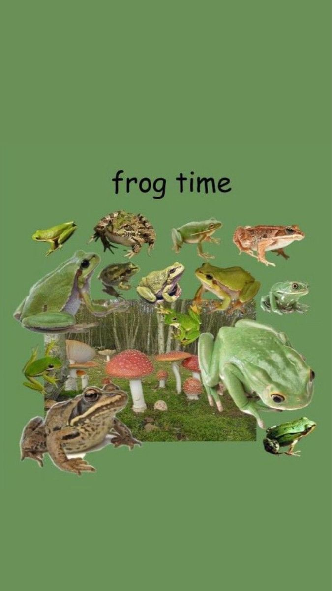 Frog Aesthetic Wallpapers Wallpaper Cave The most common indie kid frog material is metal. frog aesthetic wallpapers wallpaper cave
