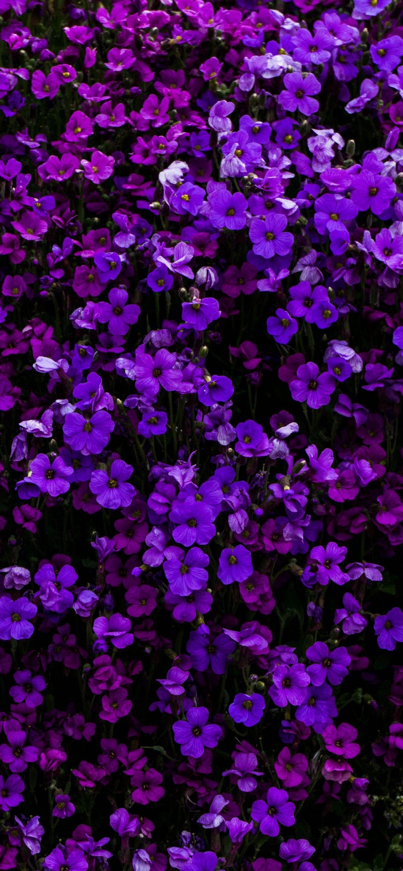 Iphone 12 Purple Wallpapers Wallpaper Cave