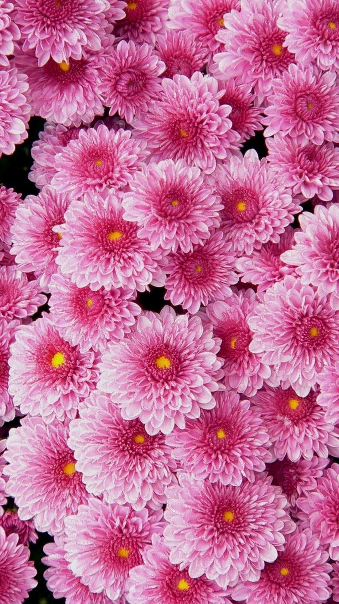 Pink Flower Wallpapers For Phone