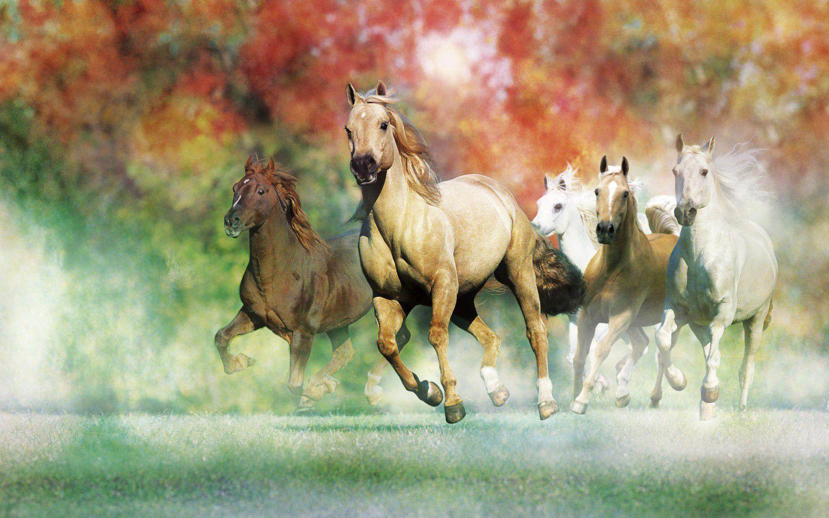 Horse Art Wallpapers - Wallpaper Cave