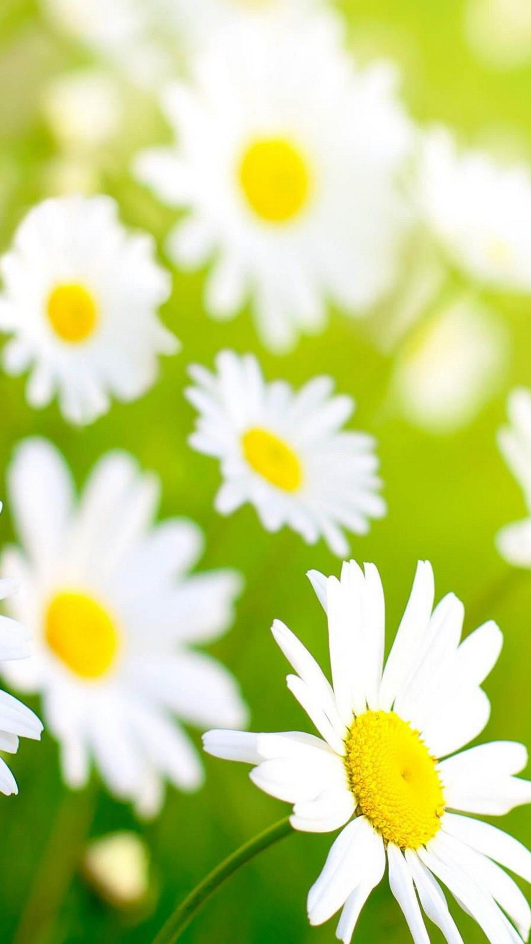 Wallpapers iPhone Spring Flowers