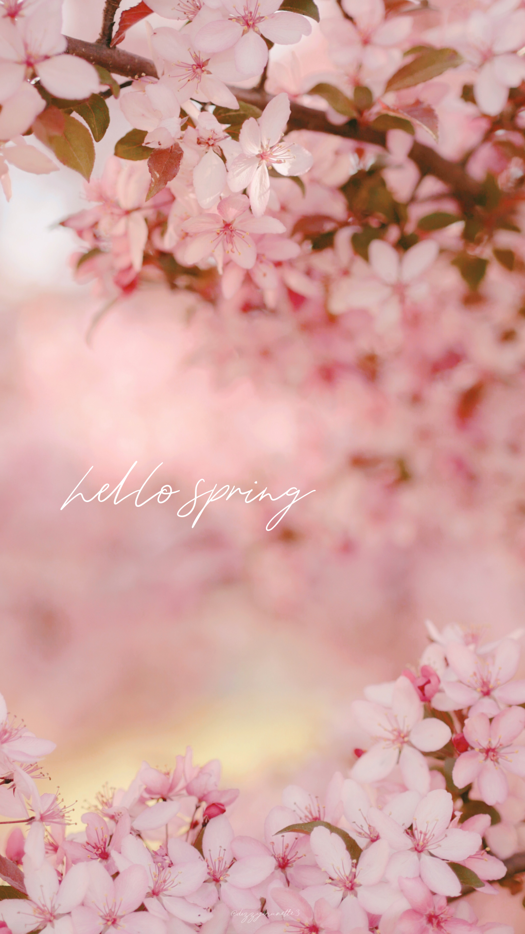 Pink Spring Flower Mobile Wallpapers ...