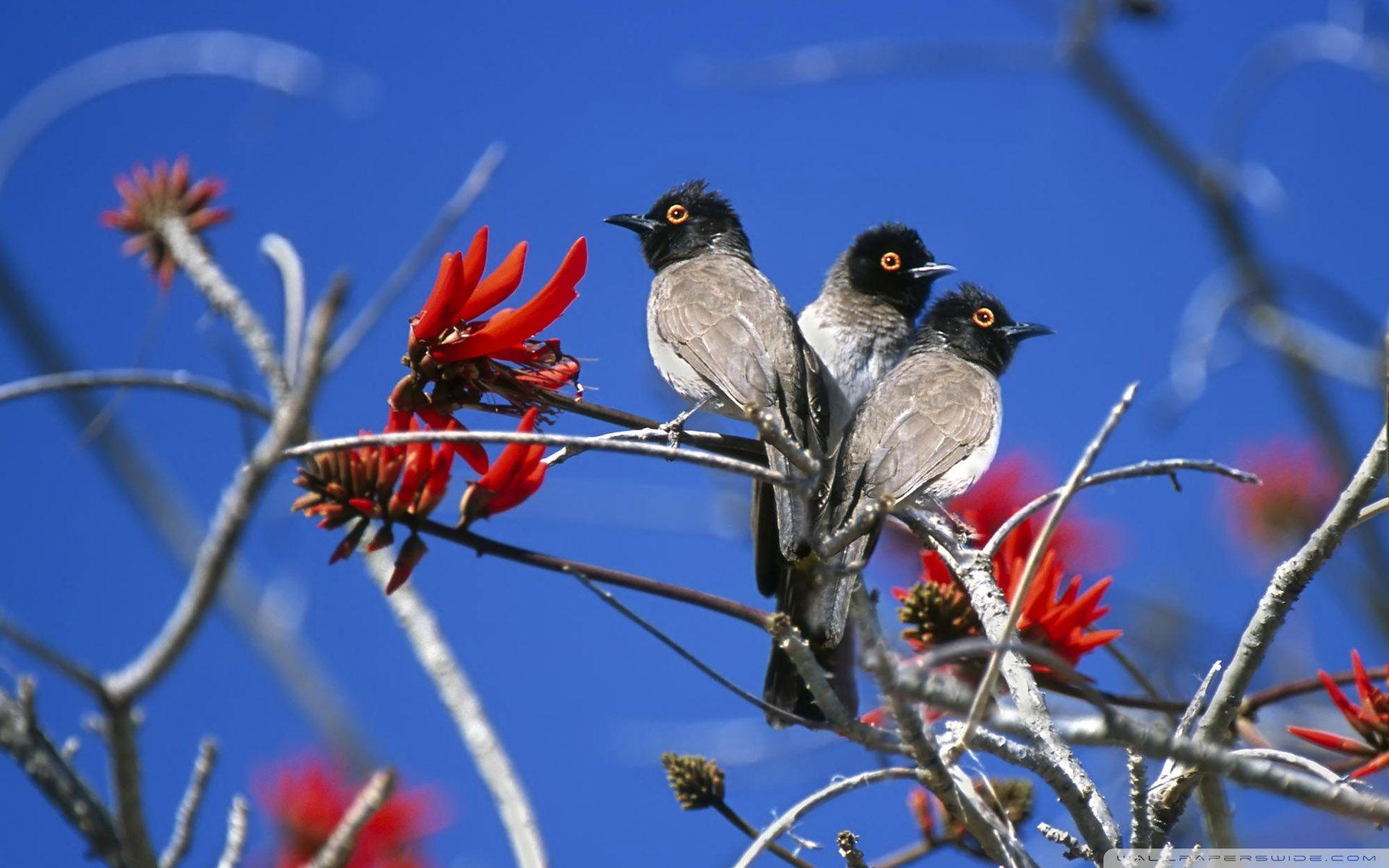 Three Birds Etosha National Park Namibia HD desktop wallpaper ...
