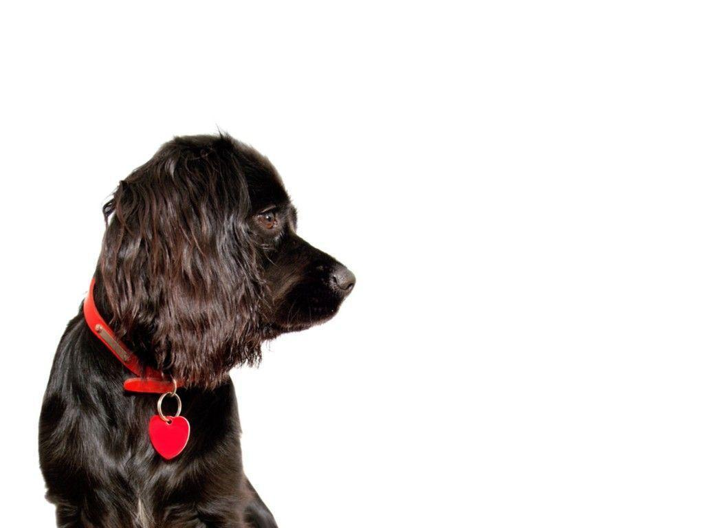 Dog looking into blank backgrounds