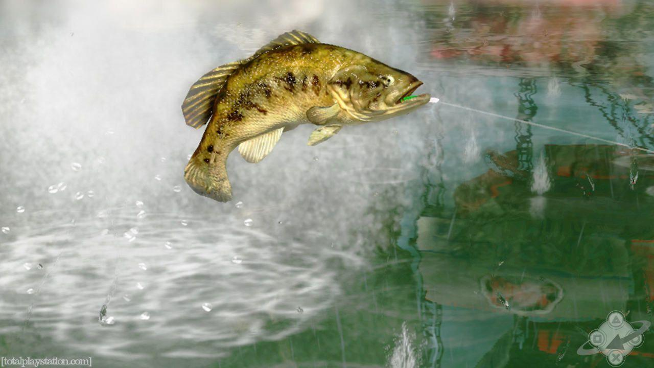 bass fishing pc wallpaper - photo #38