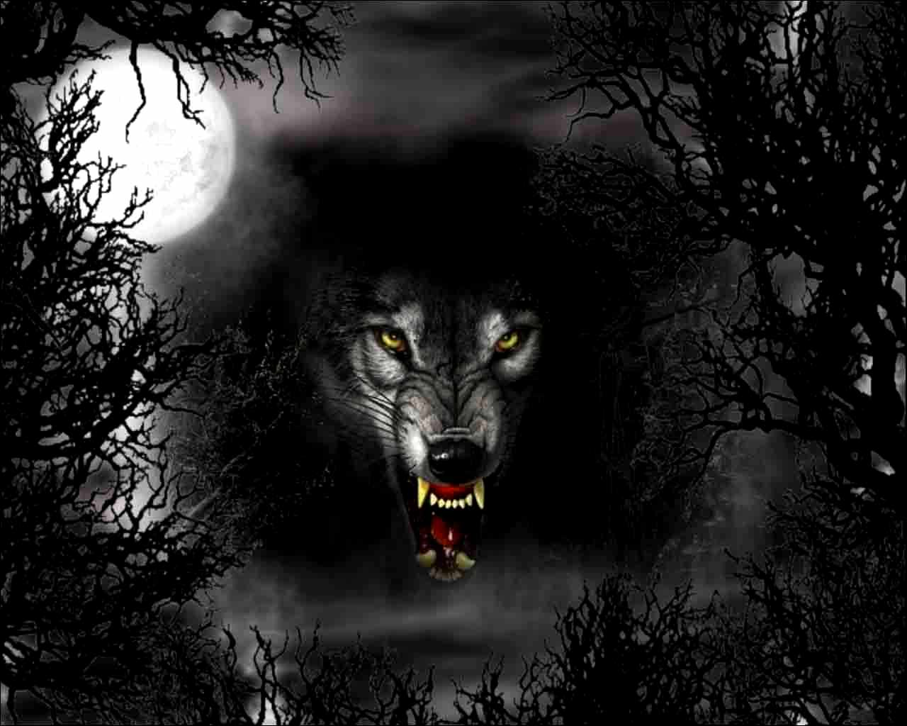 Wallpapers For Dark Wolf Wallpaper