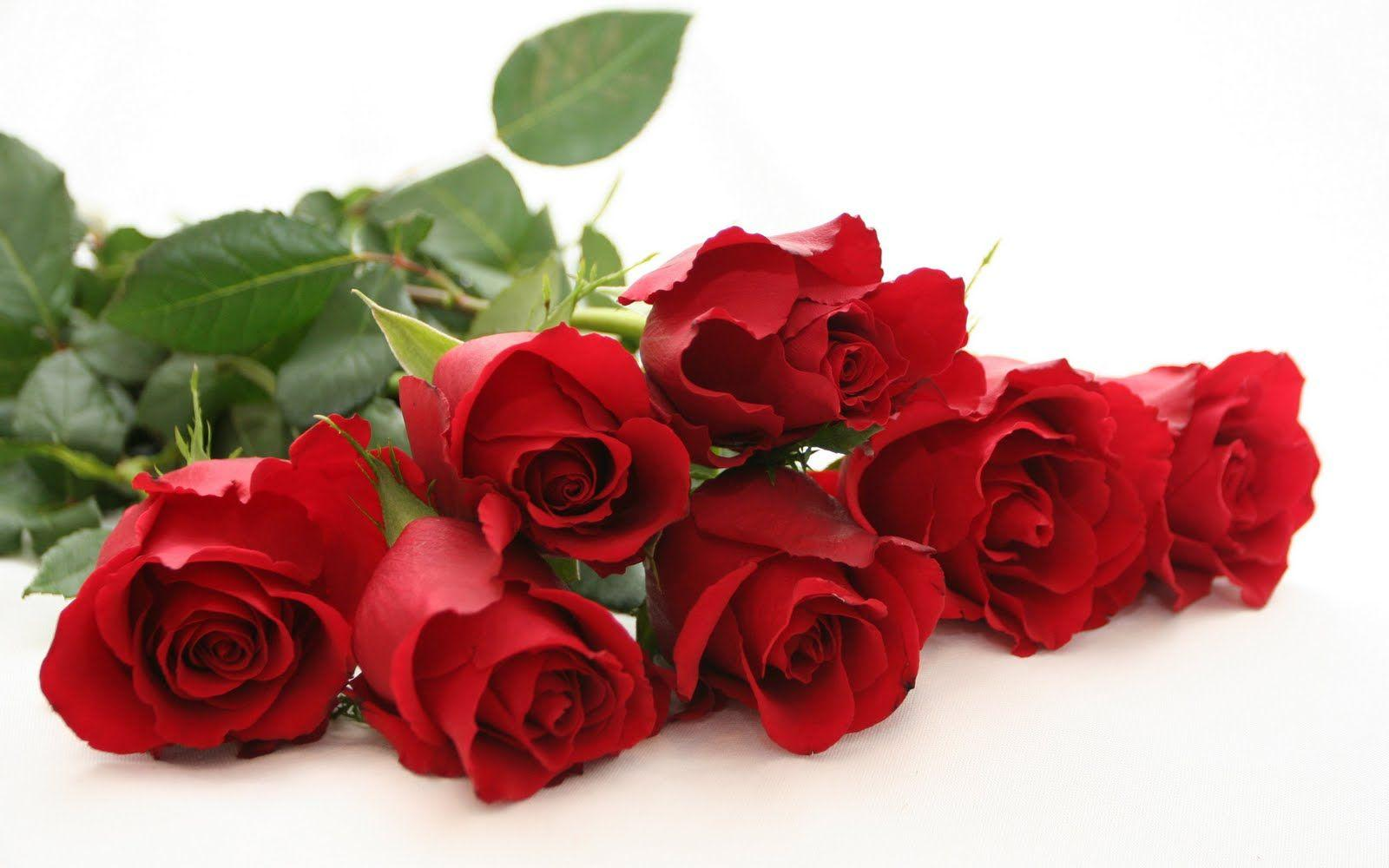Wallpaper download pagalworld - Free Rose Wallpapers Download Wallpapers Daddy