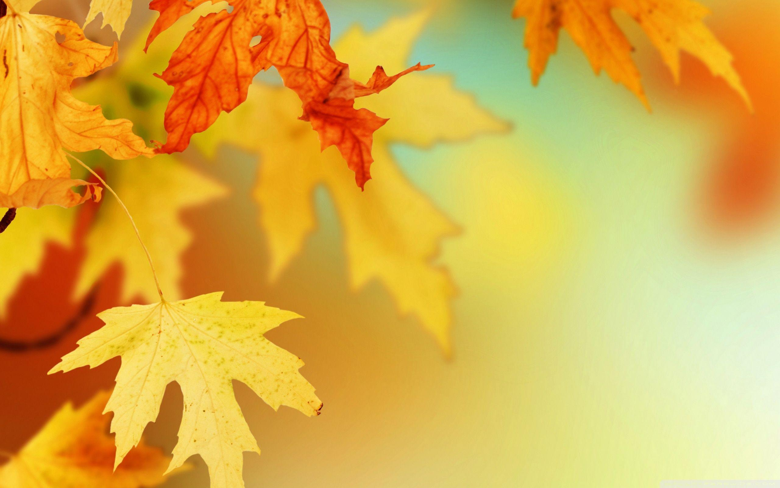 autumn leaves wallpapers desktop background imageswall