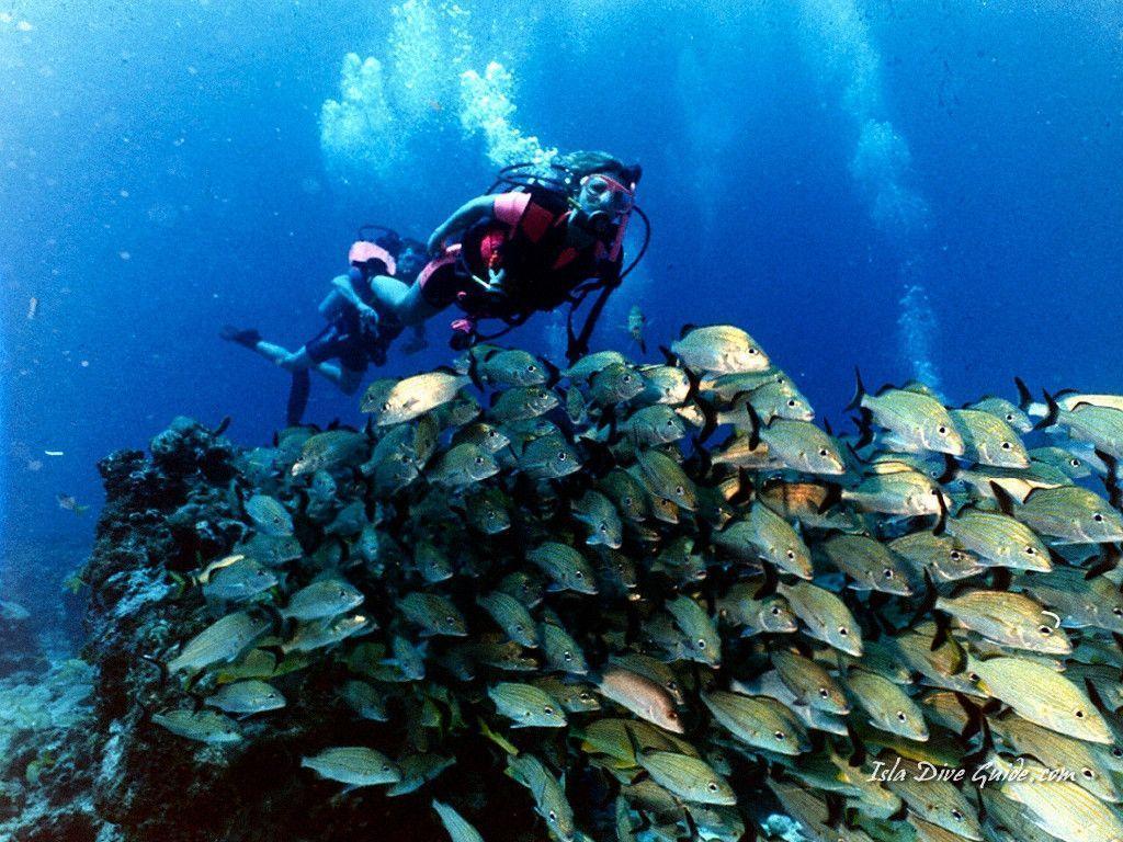 scuba diving wallpaper wallpapers - photo #20