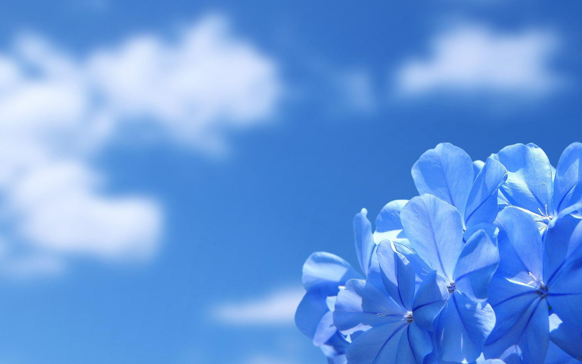 sky blue wallpapers wallpaper cave