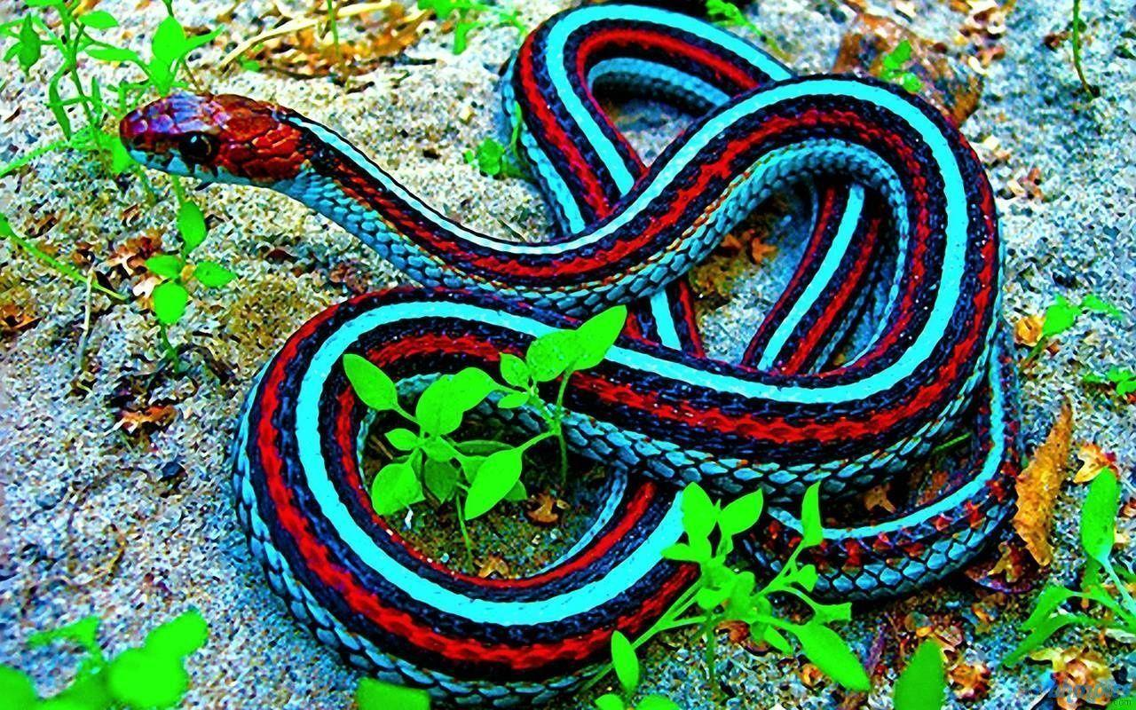 Black Mamba Snake HD Wallpapers - HD Wallpapers Inn