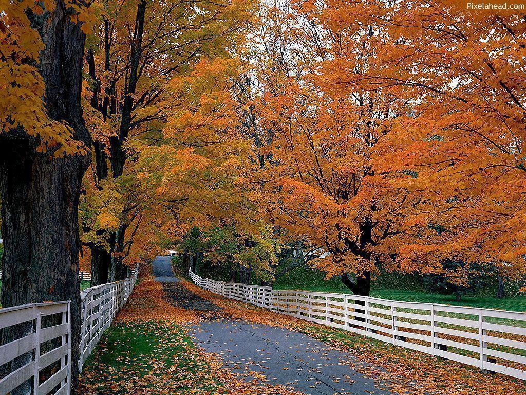Fall Wallpaper - Autumn Season's Wallpapers (3723) - HD Desktop ...