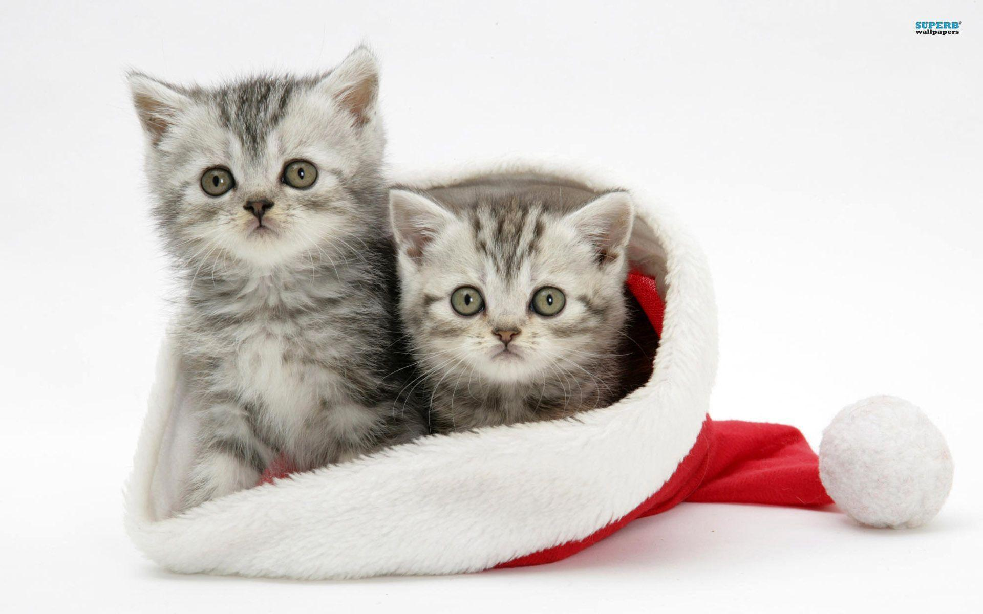 Christmas kitten wallpaper - Animal wallpapers - #