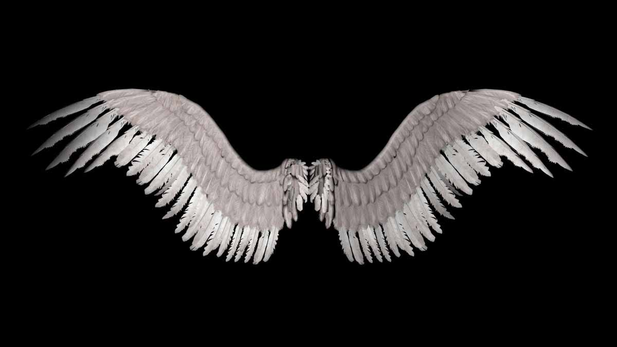 angel wings black background - photo #25