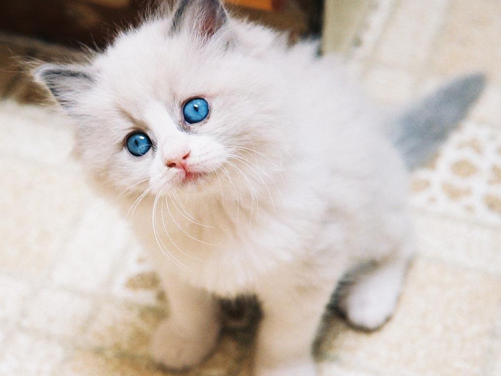 cute kitten wallpapers – 1024×768 High Definition Wallpapers