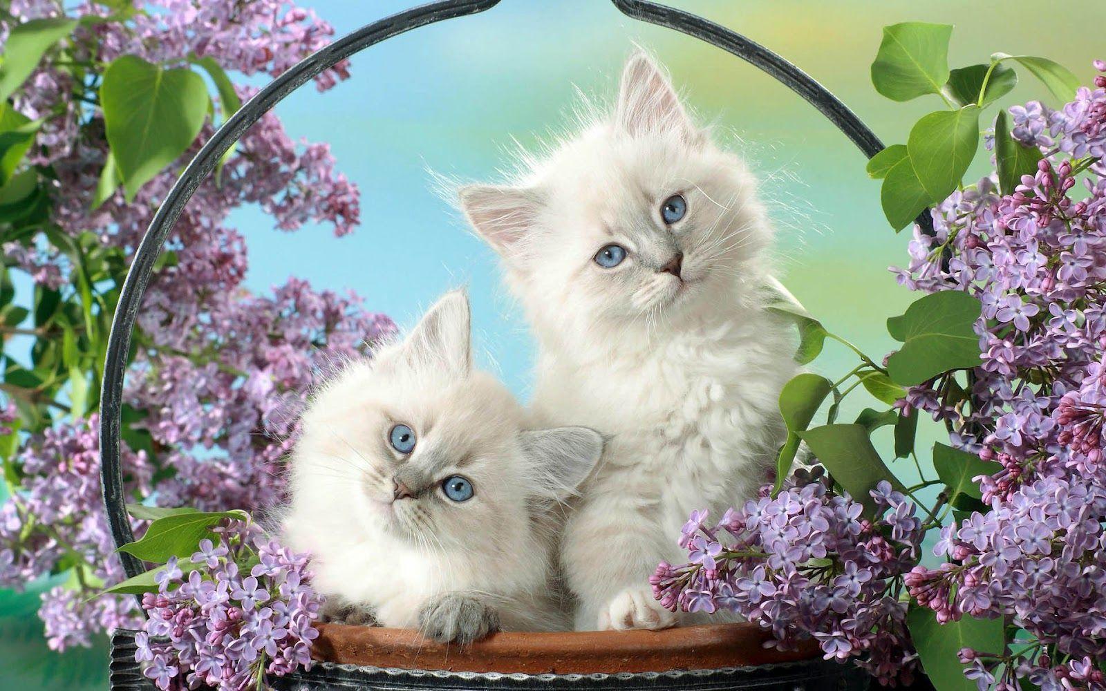 Hd wallpaper cat - Cats Hd Wallpapers Free Desk Wallpapers