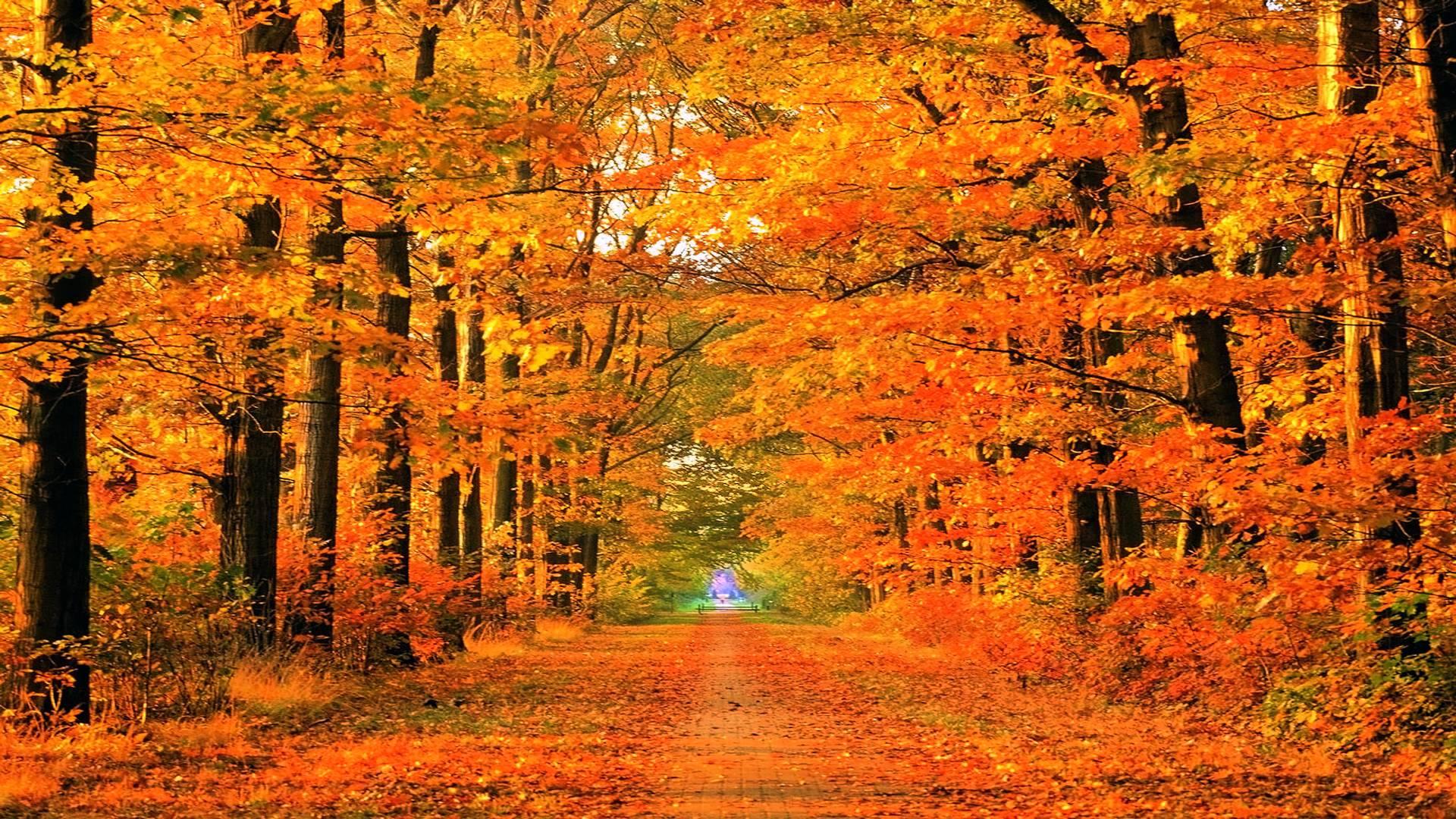 Fall Season Wallpapers Wallpaper Cave