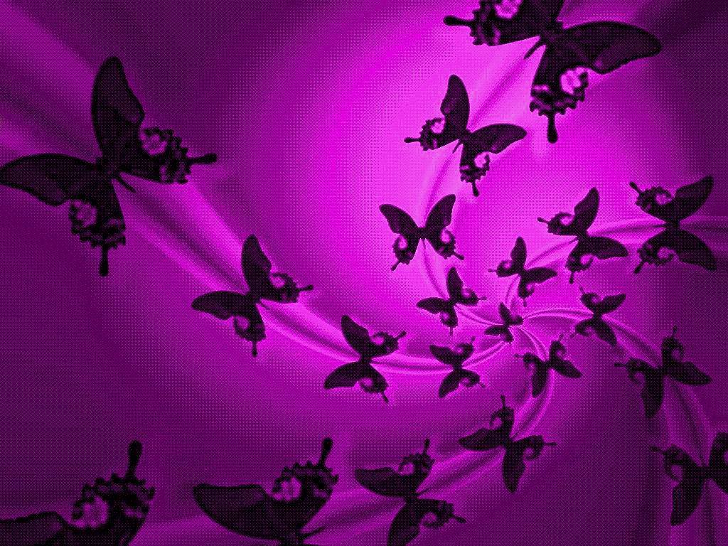 Butterflies Screensavers Download Free Wallpapers HQ Backgrounds