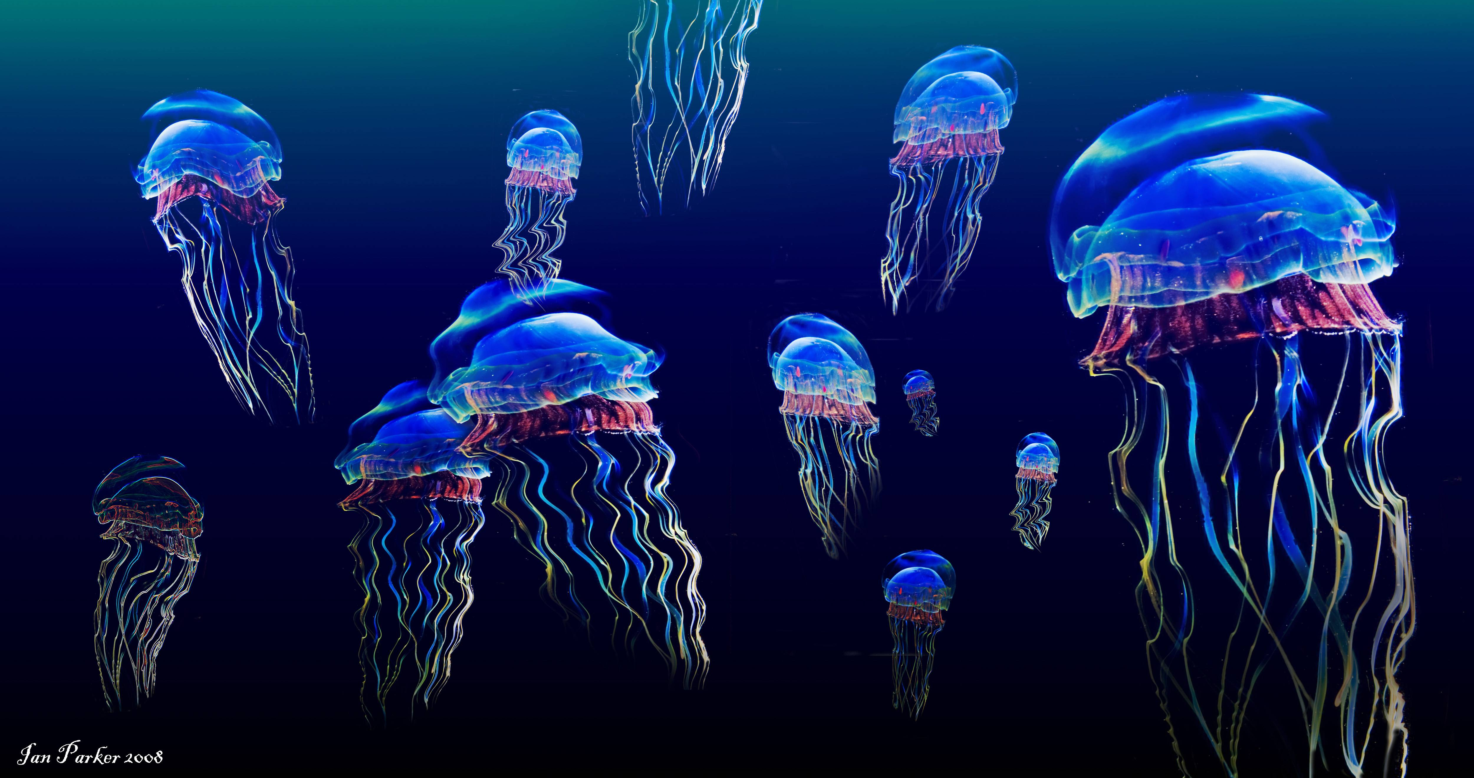 Jellyfish HD Wallpapers Backgrounds Wallpaper