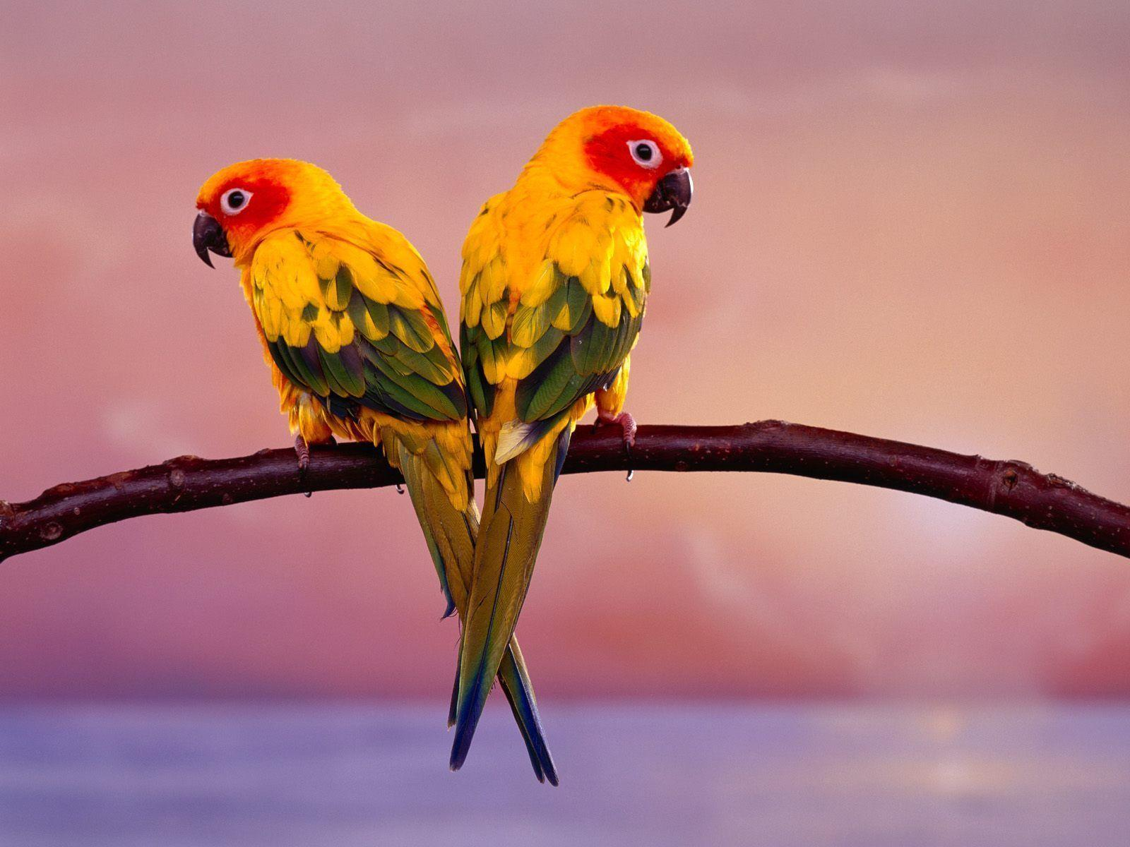 Birds Desktop Wallpaper | Birds Picture, Photos | New Wallpapers