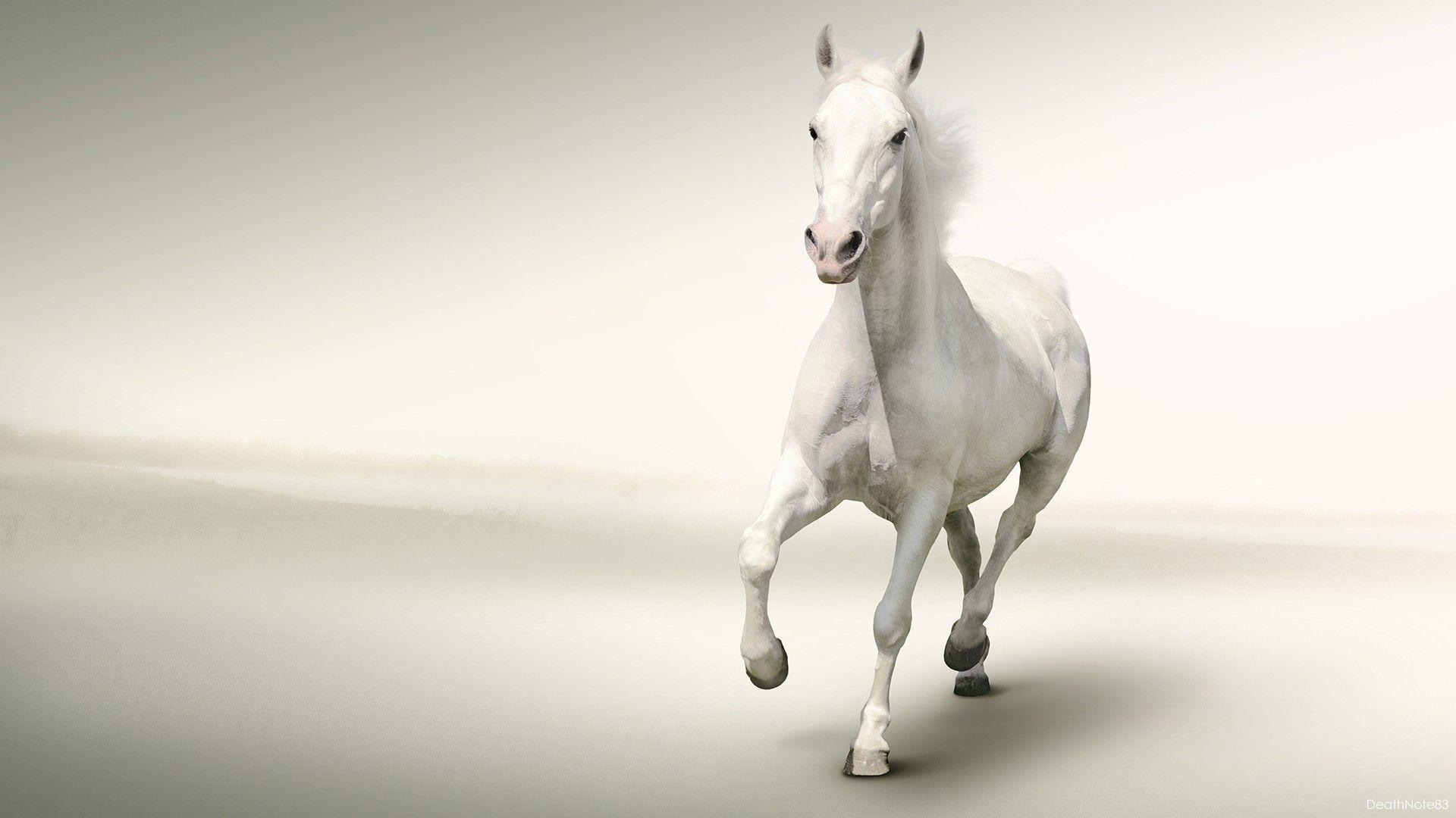 White Horse Running White Backgrounds HD Wallpapers