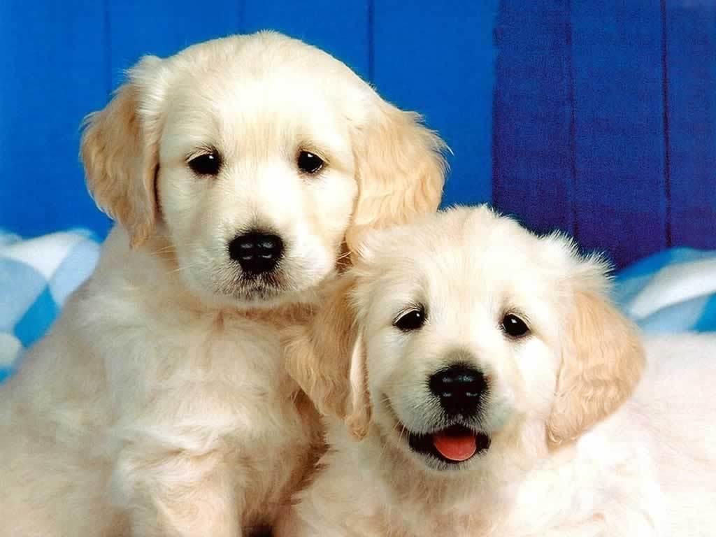 Puppies! <3 - Dogs Wallpaper (1993812) - Fanpop